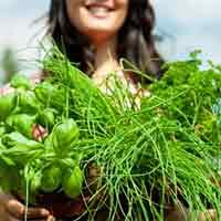 какие травы помогают избавиться от паразитов